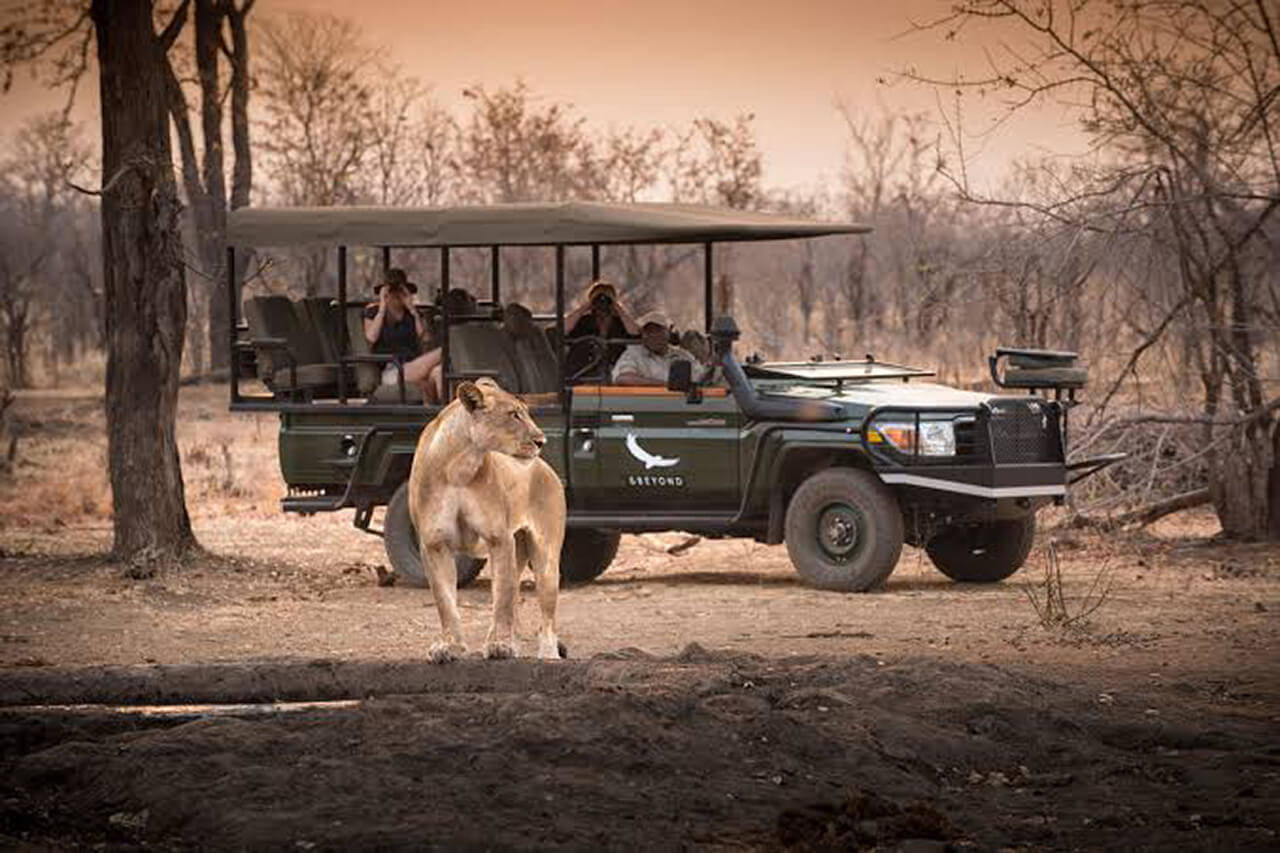 andBeyond Phinda big 5 private game reserve